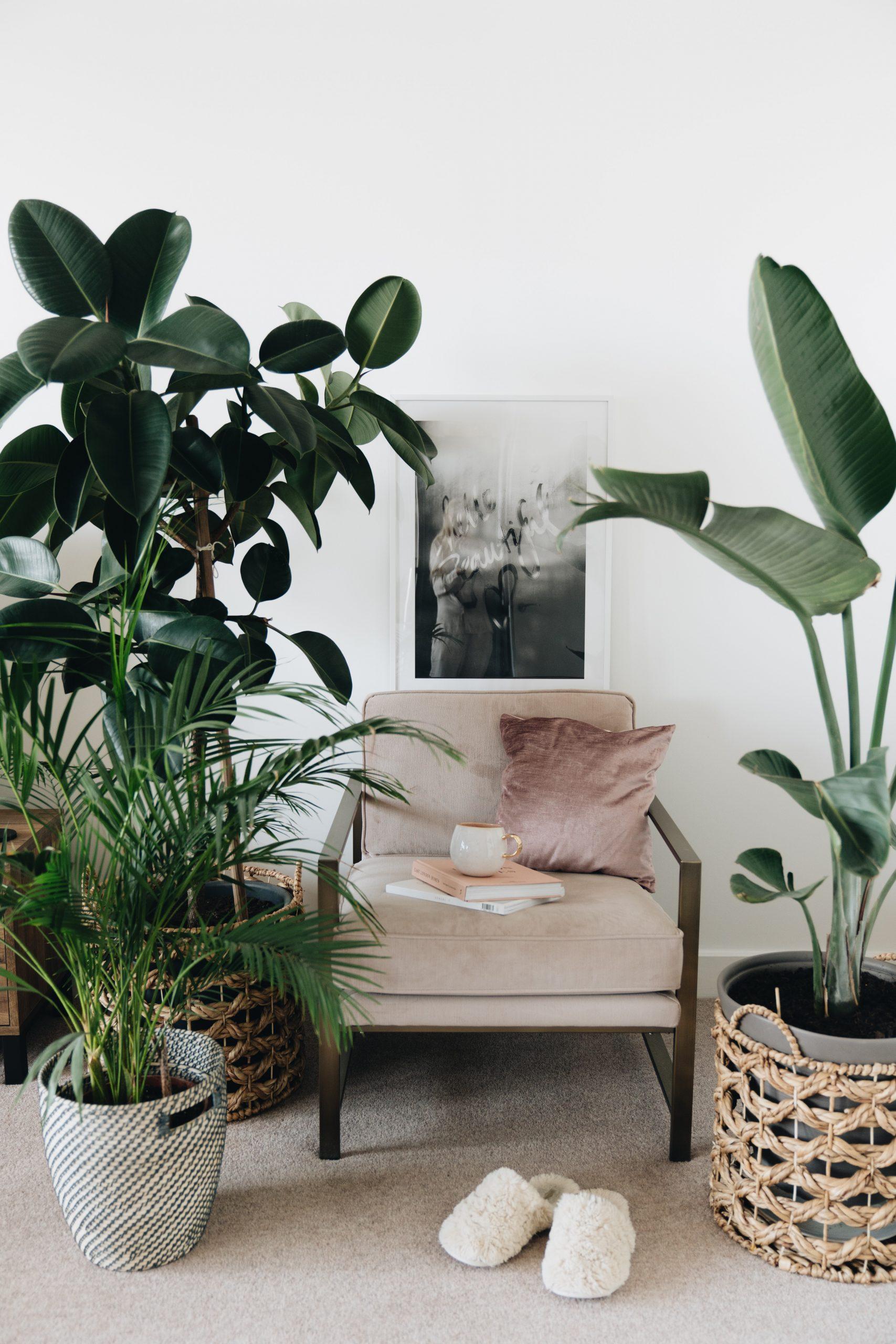 Fauteuil au milieu des plantes